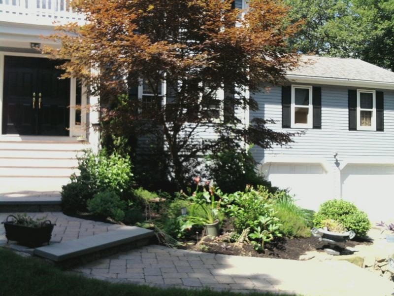 Tree Care From Start to Finish: An Interview with Andrew Stratton of Green Vistas Landscaping